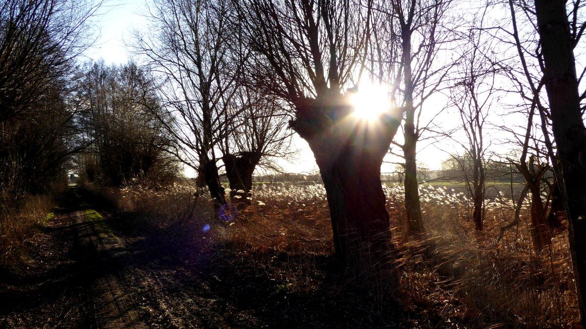 Weiden in Frankenfelde
